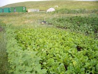 Аркаимский огород