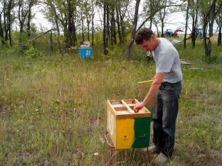 Пасека. Нуклеусы - вывод 4х новых пчелосемей