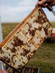 Минирамка на 12 упаковок сотового мёда