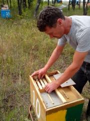 Пасека. Нуклеусы на 4 пчелосемьи