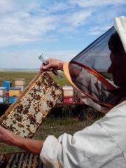 Пчеловод Олег с минирамкой.