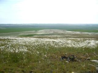 Вид с горы Откровения на заповедник Аркаим. Цветет ковыль