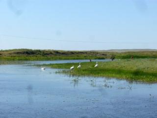 Жили гуси-лебеди на речке Караганка. Аркаим